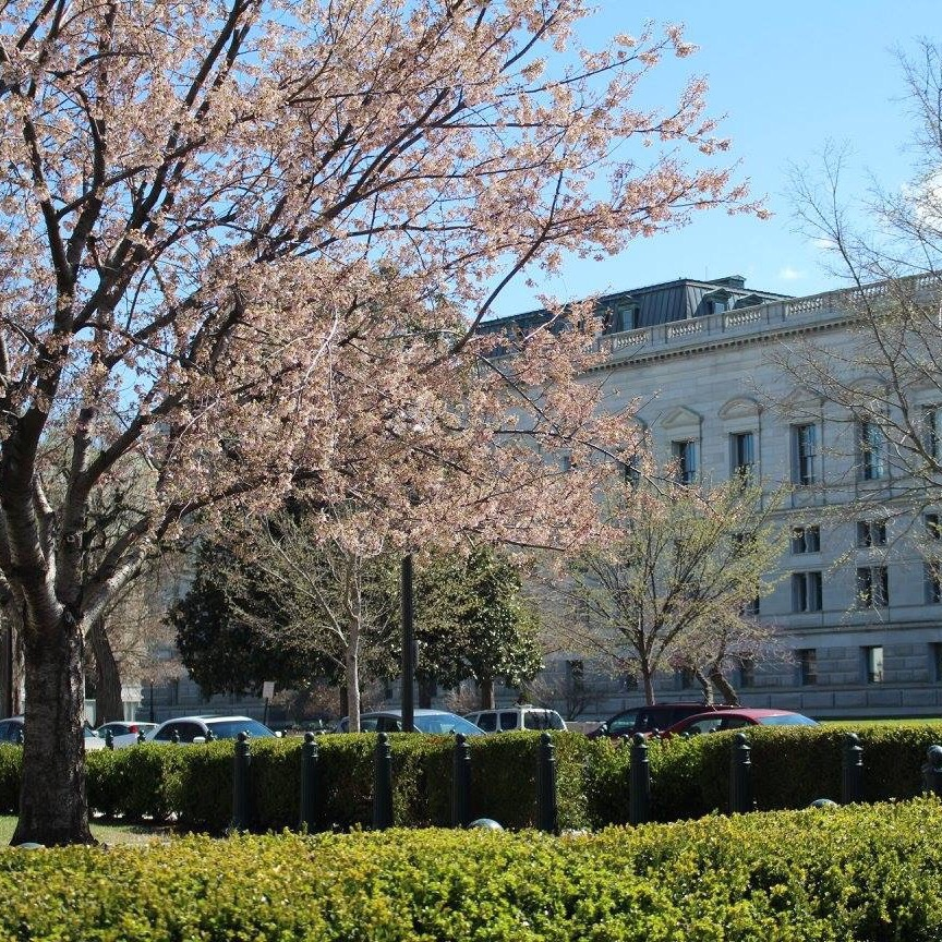 Reasons to Why You Should Visit Washington DC