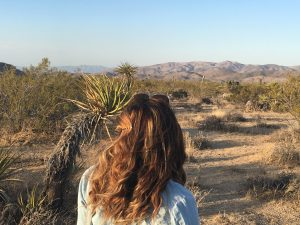 A Guide to Joshua Tree National Park in Twentynine Palms, California