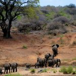 The Crisis and Concerns of Animal Extinction