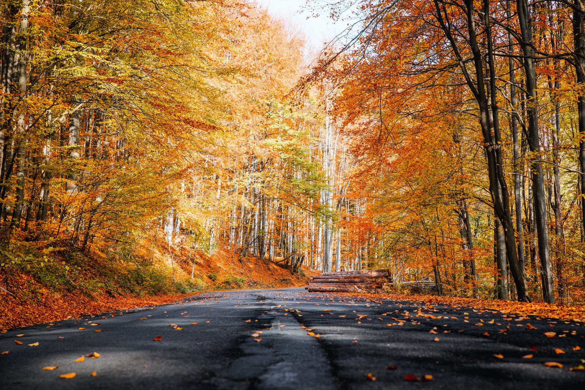 6 Best Roads In The USA To Drive Through This Fall
