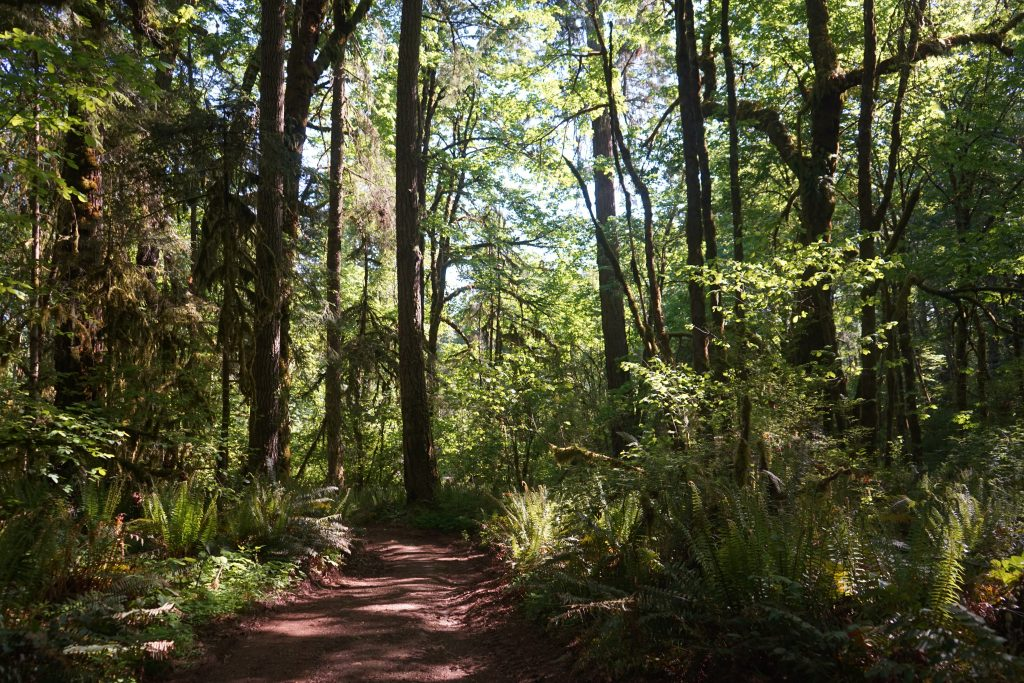 Seaquest State Park hike in Washington